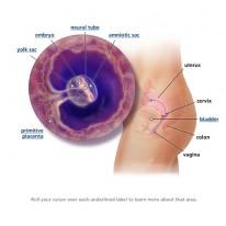 5 Weeks Pregnancy Symptoms