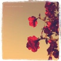 Instagram Iphoneography