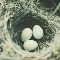 birds nest photo