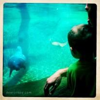 columbus-zoo-manatees