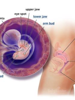6 Weeks Pregnant Symptoms