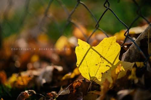 Creating fall memories