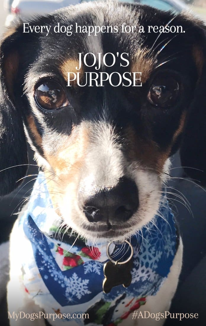 Reason Dog S Purpose Movie