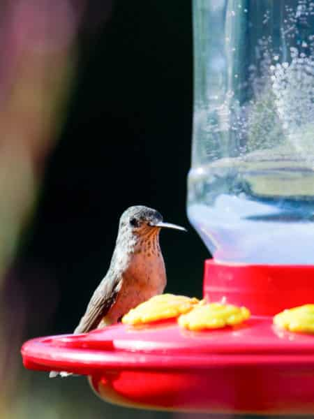 Easy Hummingbird Food Recipe