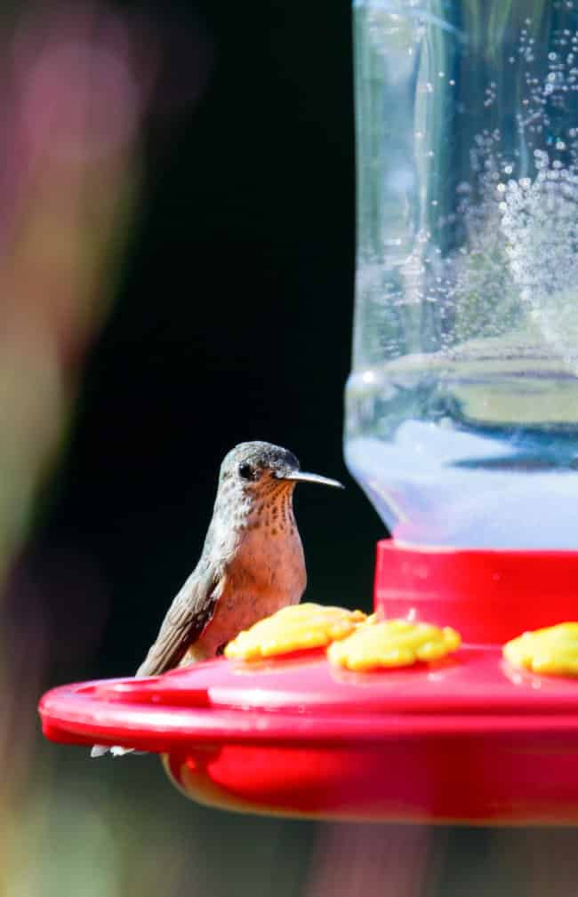 Easy Hummingbird Food Recipe